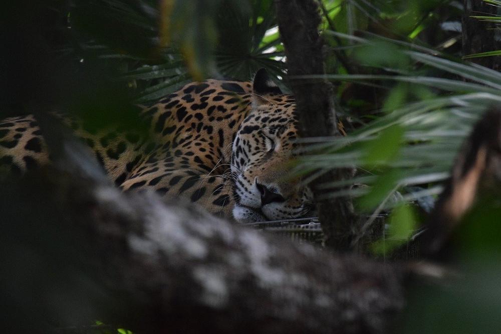 5 curiosités à découvrir en voyage au Belize
